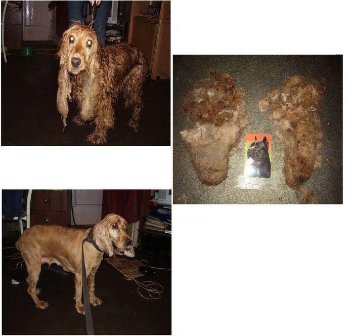 perros-abandonados-antes-despues-adopcion-10