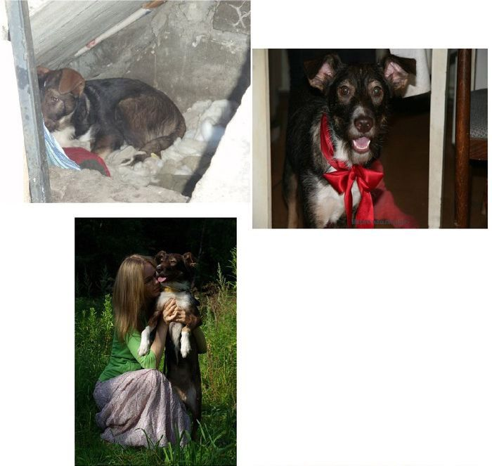 perros-abandonados-antes-despues-adopcion-11