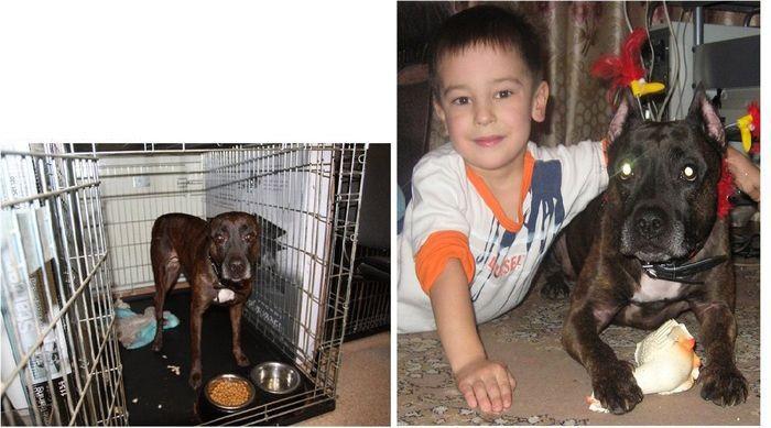 perros-abandonados-antes-despues-adopcion-12