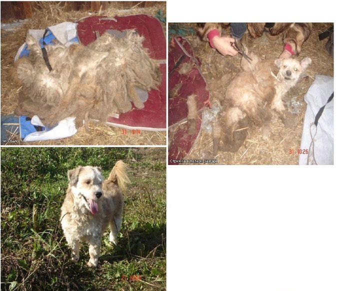 perros-abandonados-antes-despues-adopcion-13