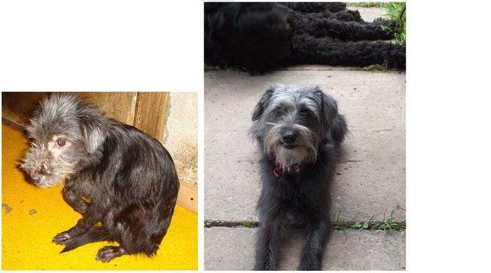perros-abandonados-antes-despues-adopcion-14