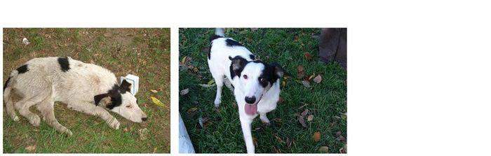 perros-abandonados-antes-despues-adopcion-15
