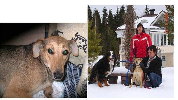 perros-abandonados-antes-despues-adopcion-16