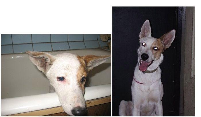 perros-abandonados-antes-despues-adopcion-17