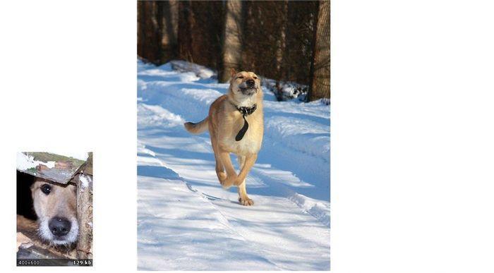perros-abandonados-antes-despues-adopcion-18