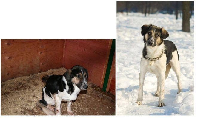 perros-abandonados-antes-despues-adopcion-19