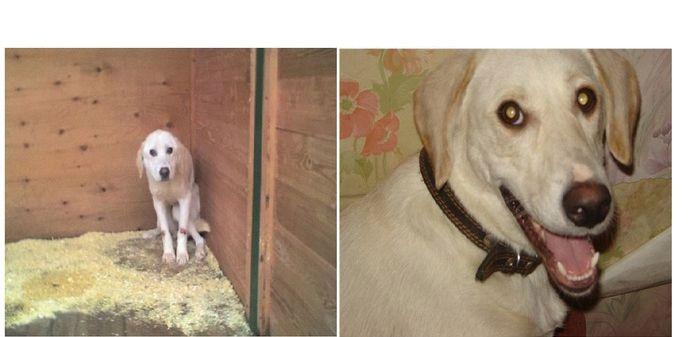 perros-abandonados-antes-despues-adopcion-20