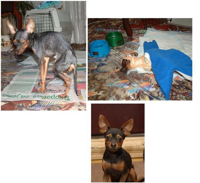 perros-abandonados-antes-despues-adopcion-21