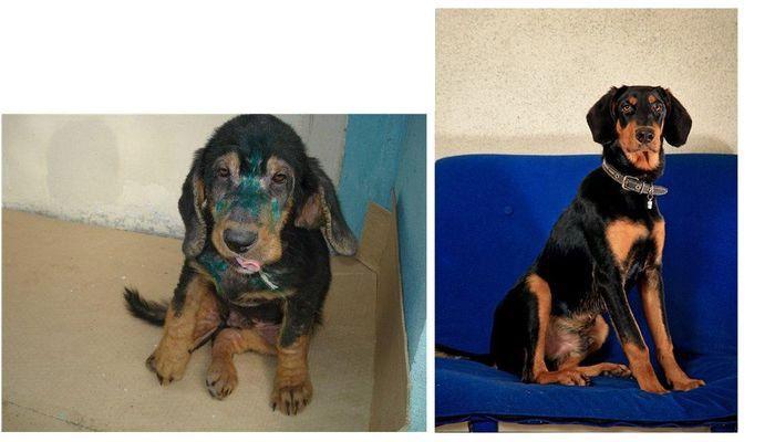perros-abandonados-antes-despues-adopcion-23