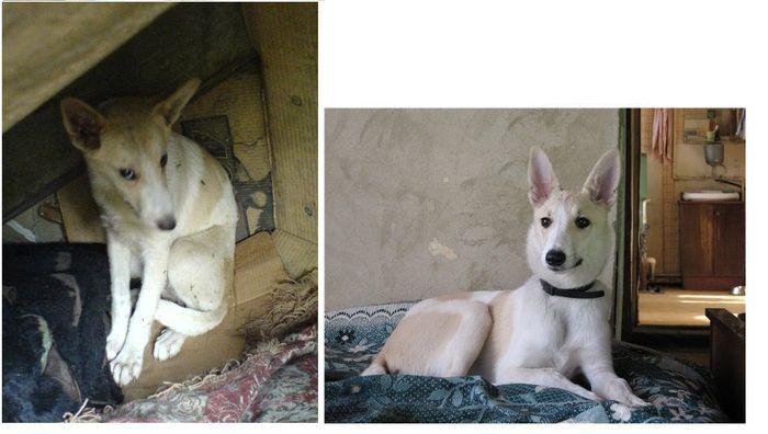 perros-abandonados-antes-despues-adopcion-25