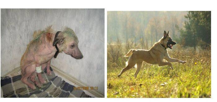 perros-abandonados-antes-despues-adopcion-26