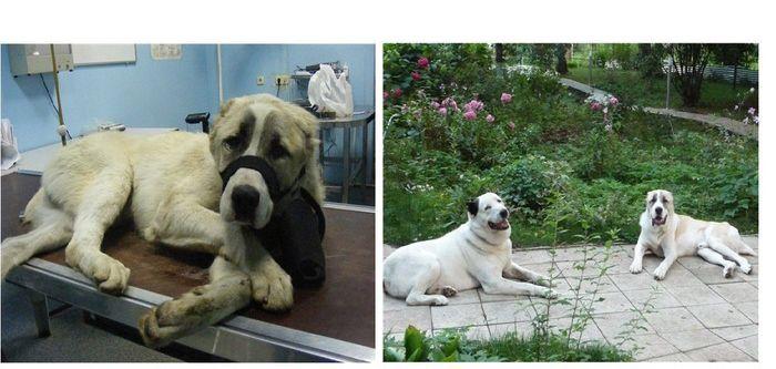 perros-abandonados-antes-despues-adopcion-27