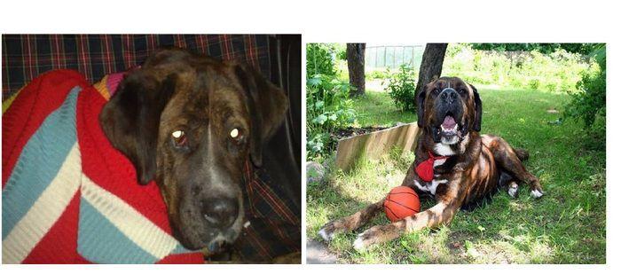 perros-abandonados-antes-despues-adopcion-28
