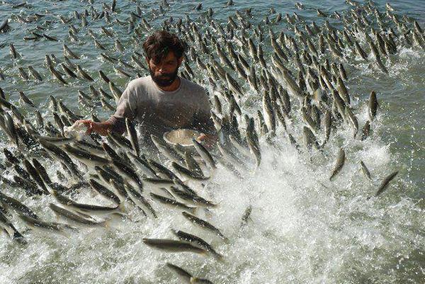 pesca-facil