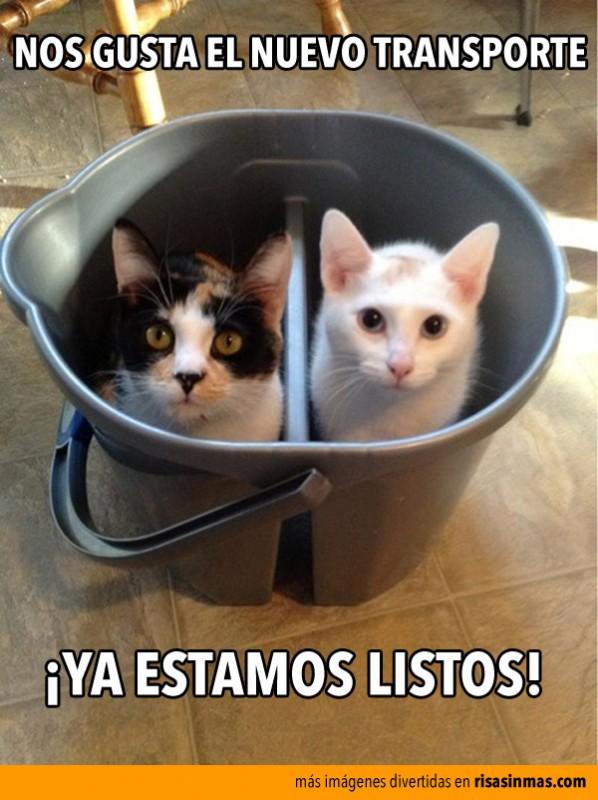 transporte-gatos