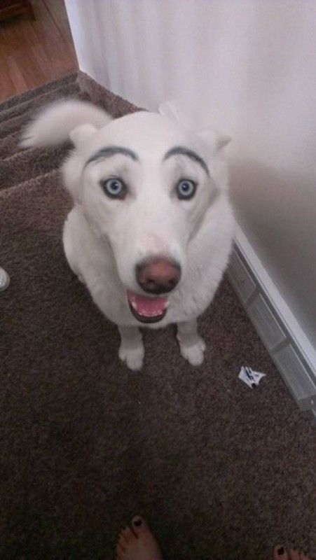 02-eyebrows_on_dogs
