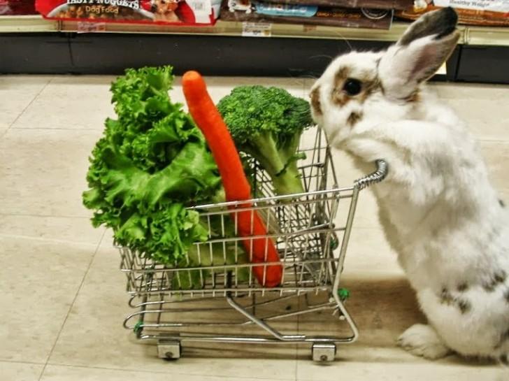 conejo-compla