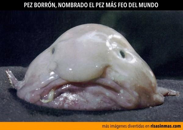 pez-borron