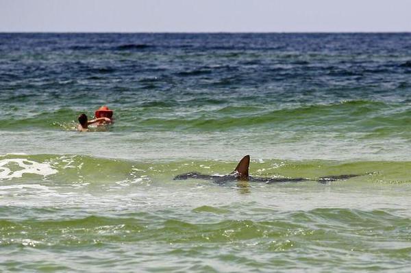 tiburon-a-la-vista