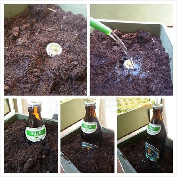 la-cerveza