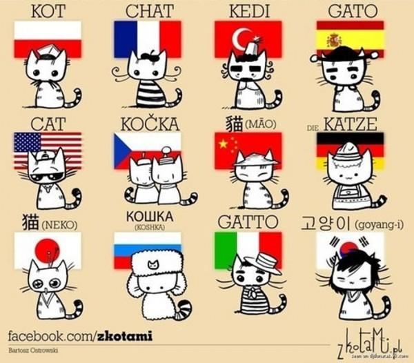 gatos-mundo