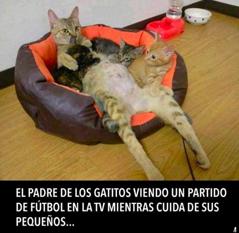 papa gatos