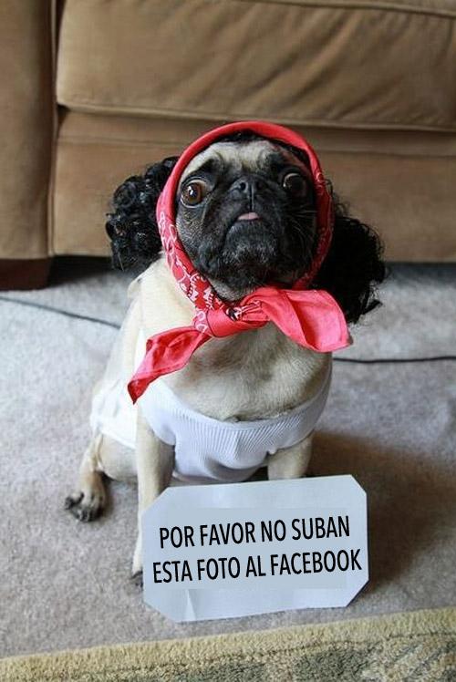 perro-avergonzado