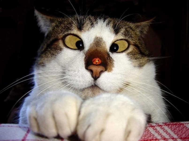 gatos caras graciosas-1