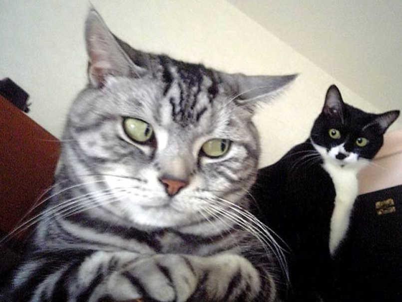 gatos caras graciosas-2