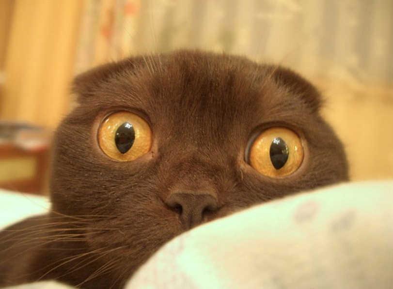 gatos caras graciosas-3