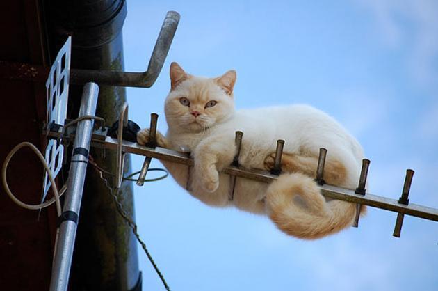 gato-television