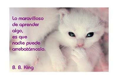 gato-savio