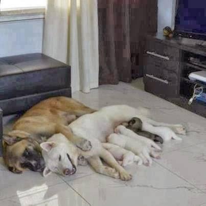 mama perro