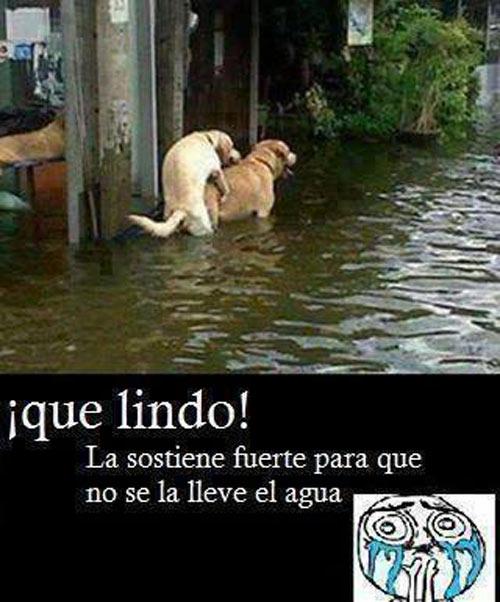 perretes-agua