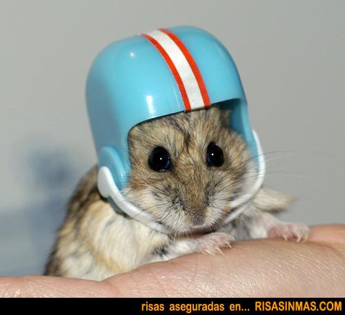 NFL-rsm