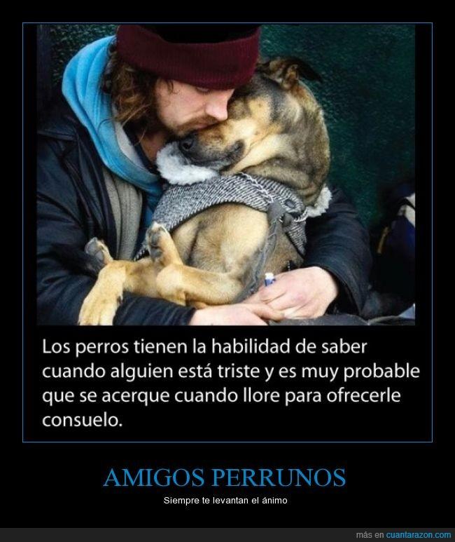 amigos_perrunos