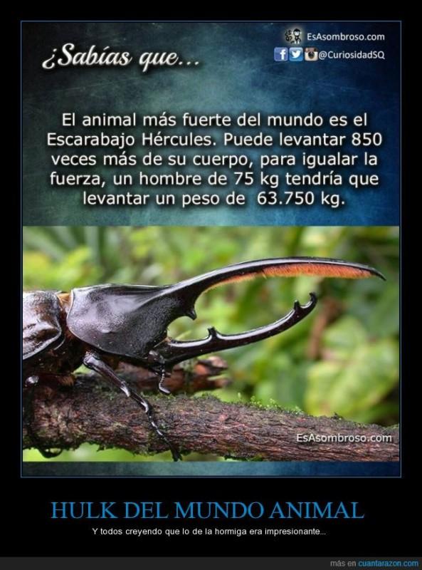 curiosidades-escarabajo
