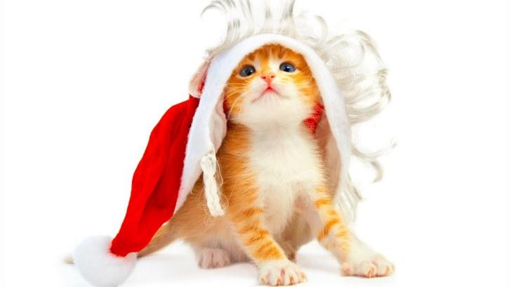 gatito disfraz