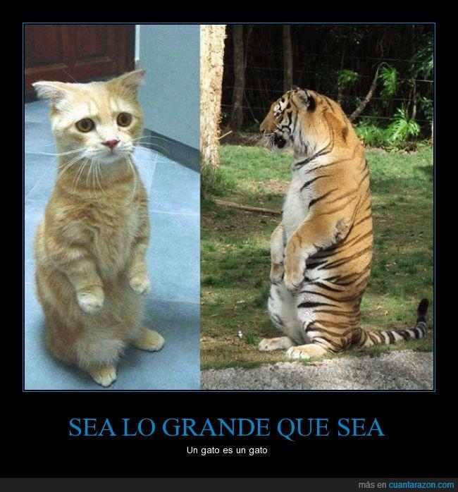 grande_que_sea