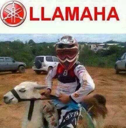 llamaha