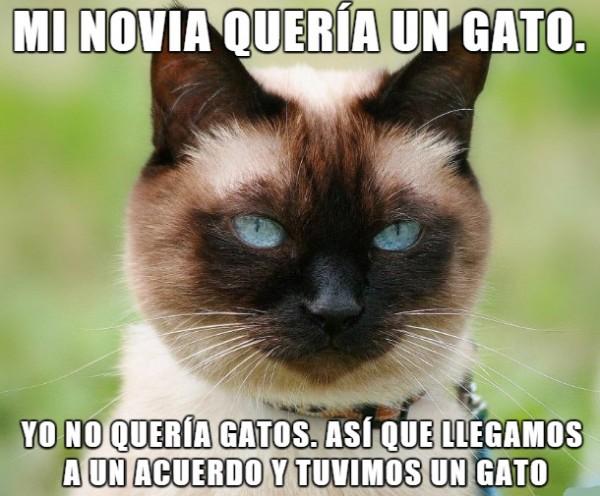 novia-gato