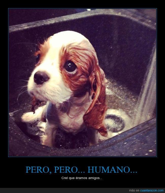 pero_humano