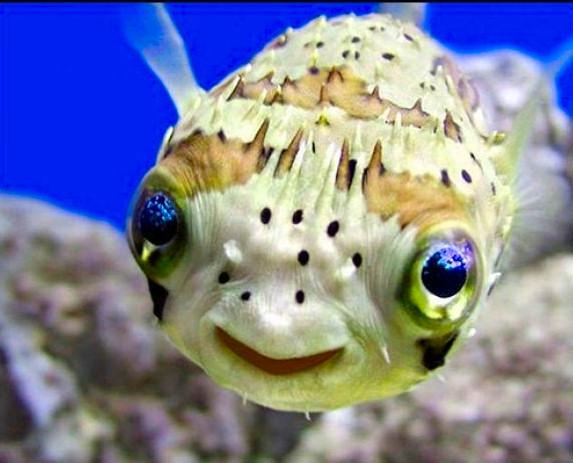 pez risa