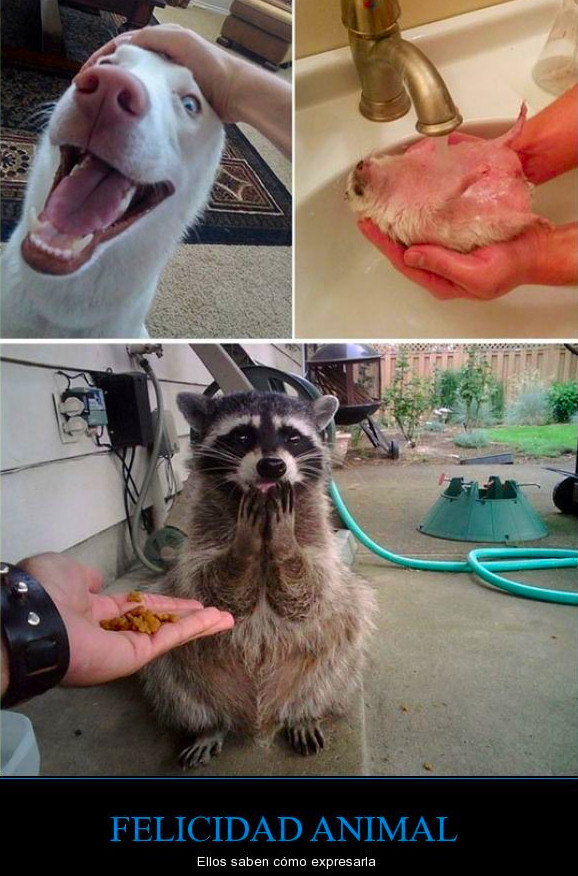 felicidad animal