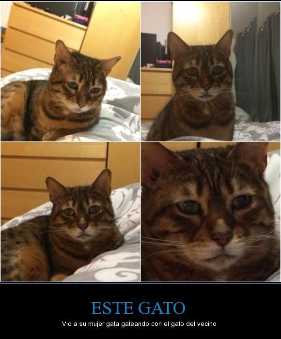 gato cuernos