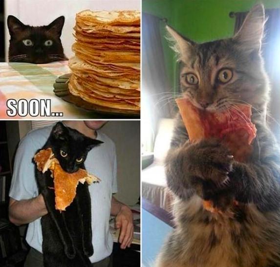 gatos pizzas