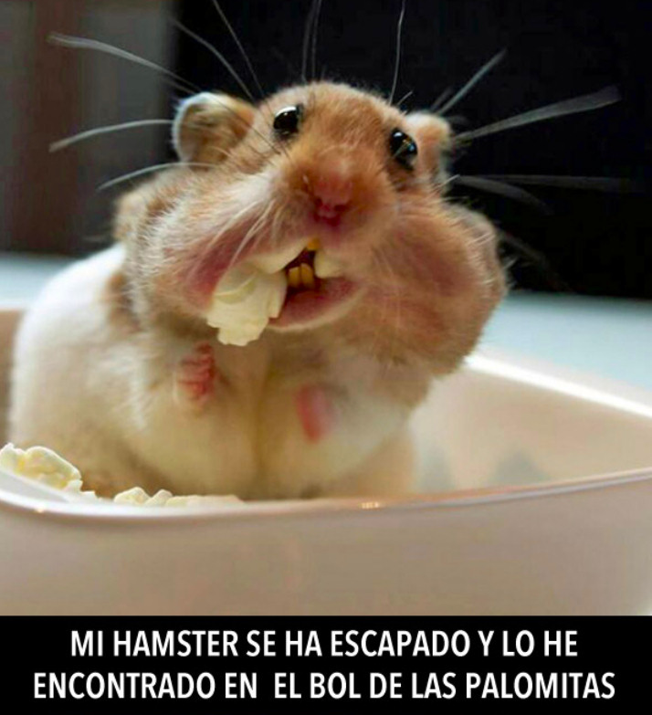 hamter