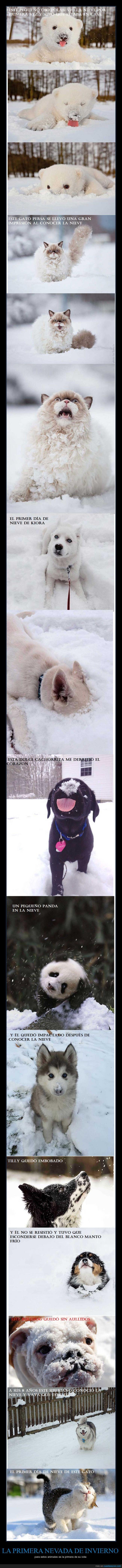 perros animales nieve