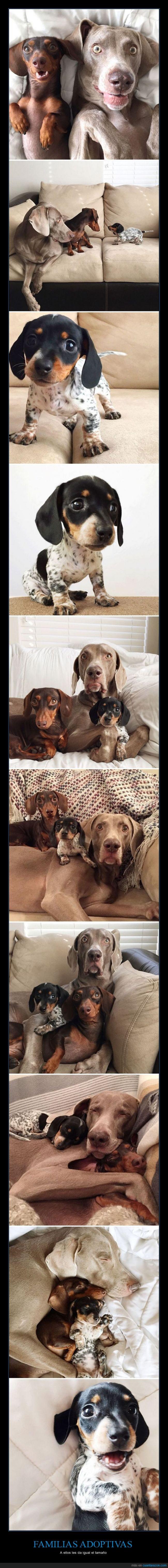 perros familias adoptivas