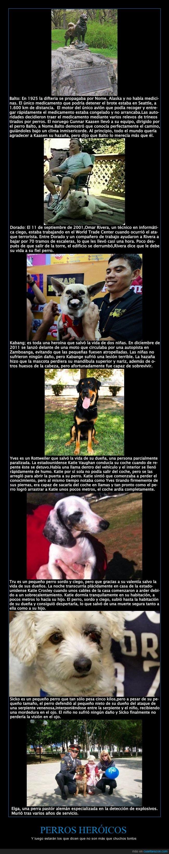 perros heroicos